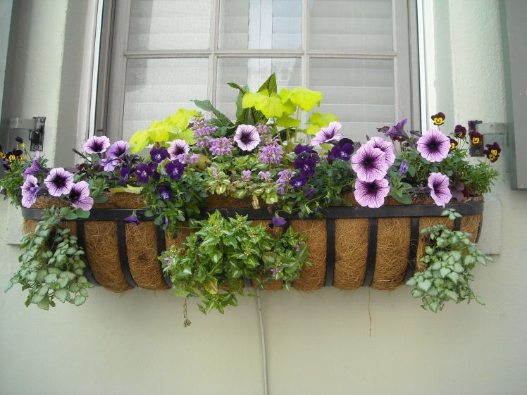 window-box-891985_1920
